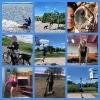 Sveikatingumo ir turizmo diena